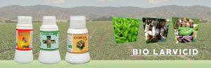 Seaweed Fertilizer Supplier