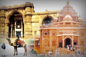 humic amino ball supplier in Gujarat