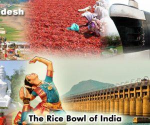 Humic Amino Ball in Andhra Pradesh
